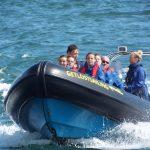 Sea Safari Cruise